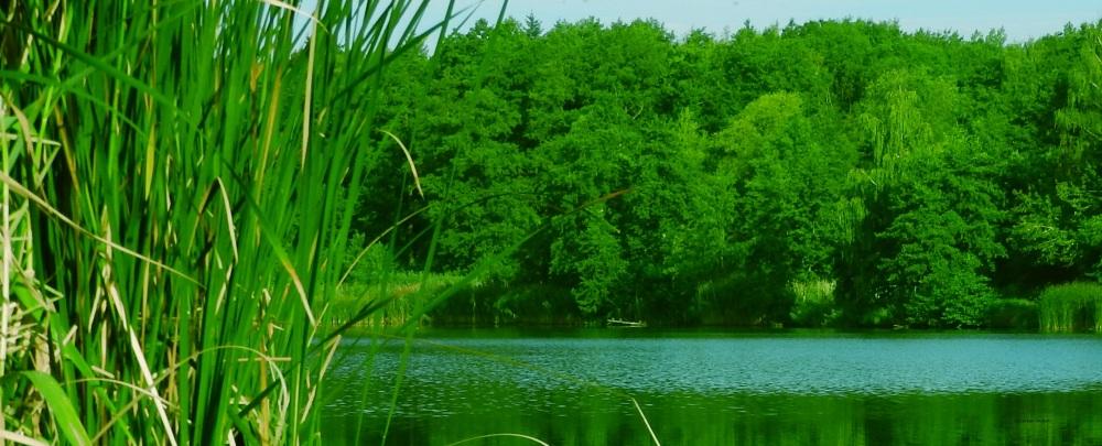 zieleń13.jpg