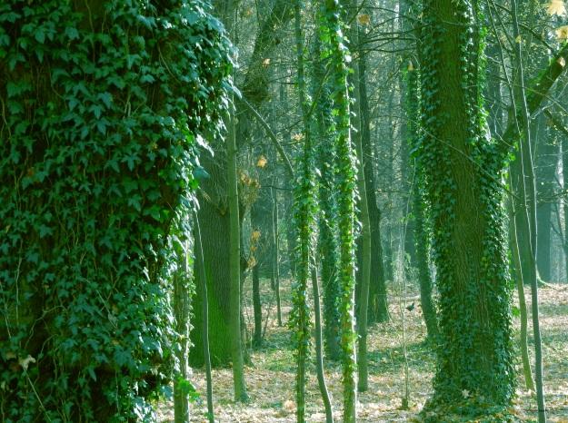 dżungla1.jpg