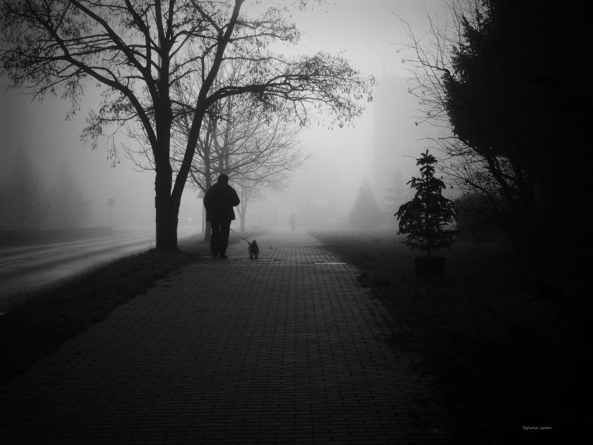 mgła12.jpg