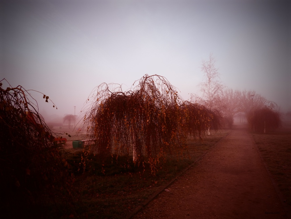 mgła18.jpg