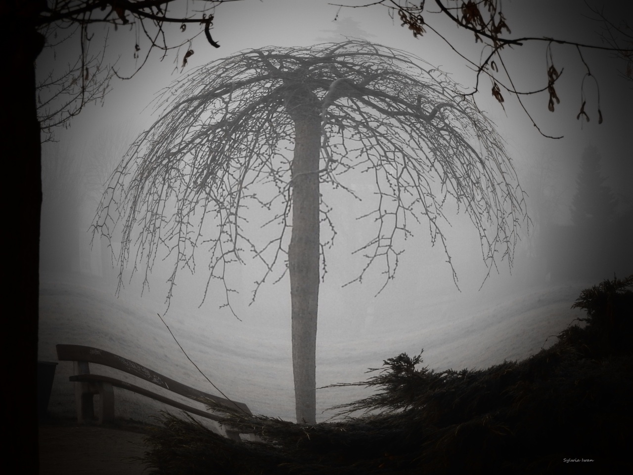 mgła8.jpg
