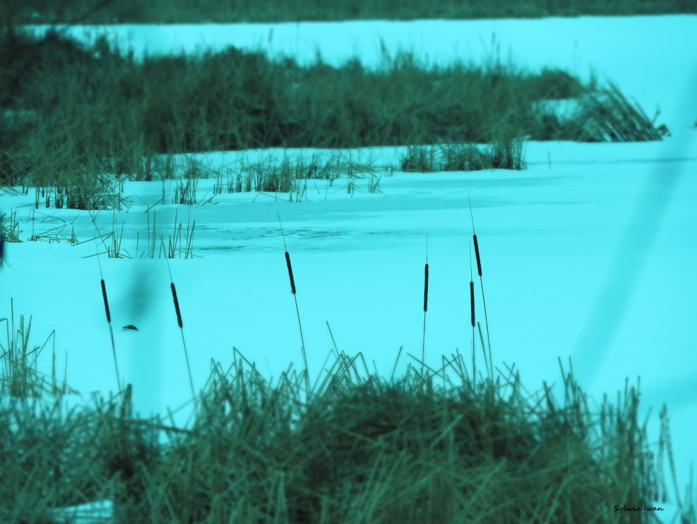 jezioro3.jpg