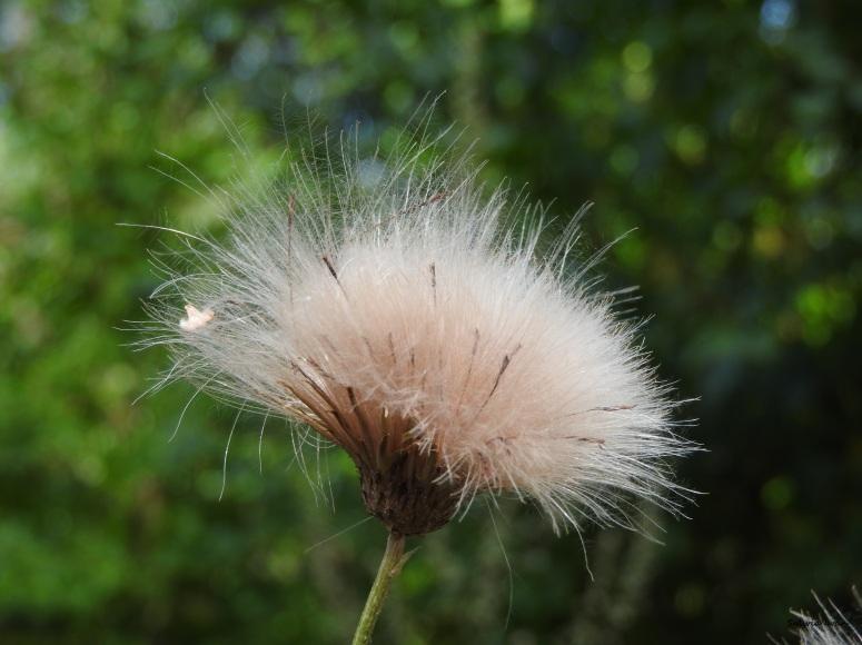 bawełna1.jpg