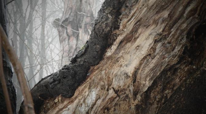 Strangi leśno-przydrożne