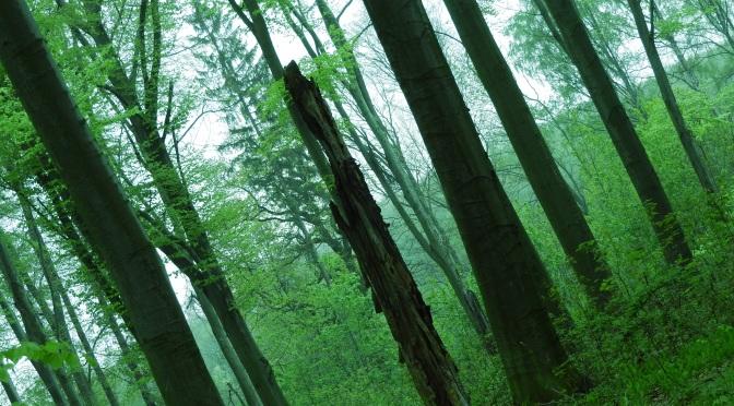 … a w moim lesie nadal spokój