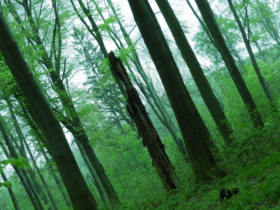 … a w moim lesie nadalspokój