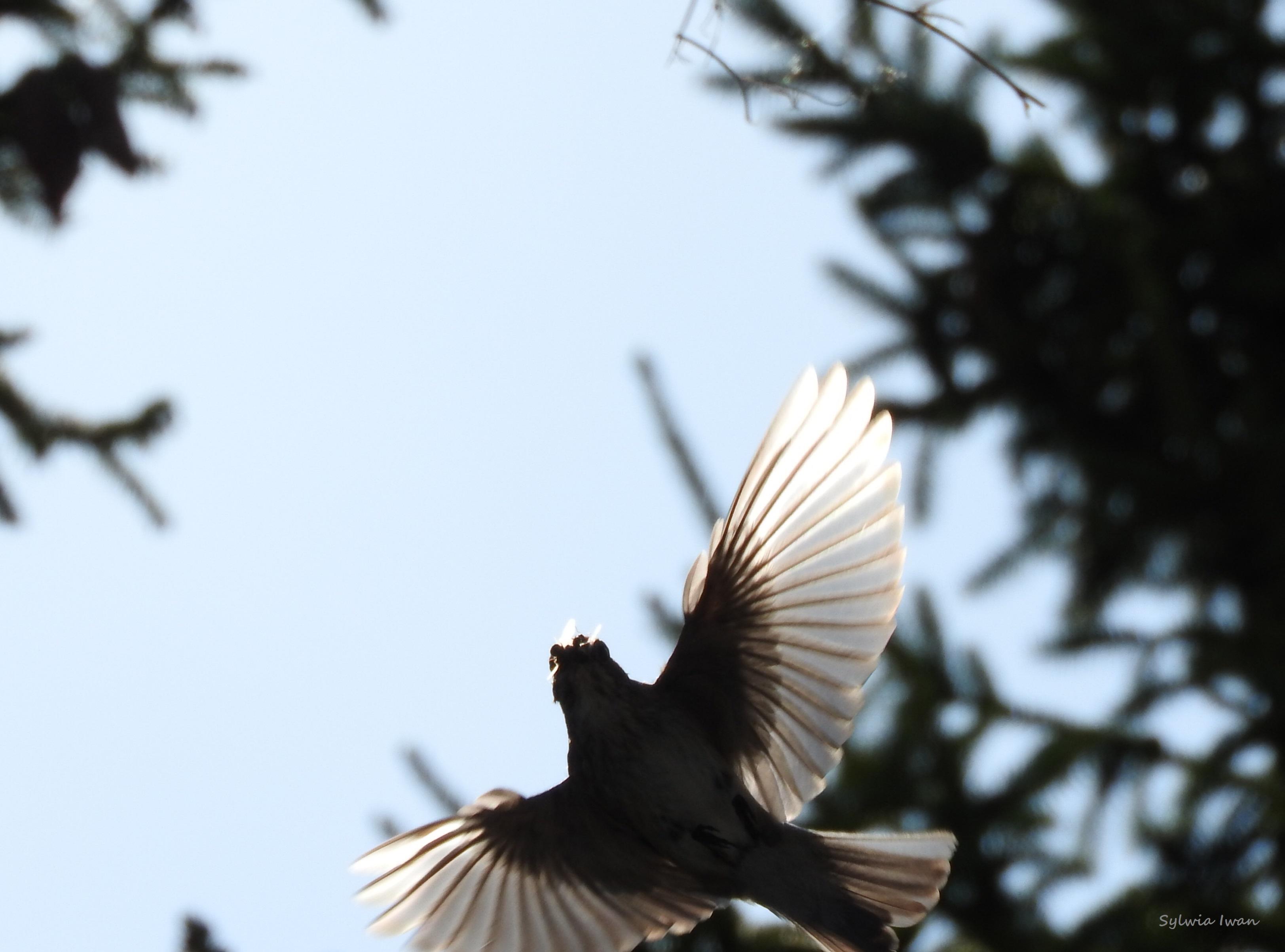 Prawie koliber