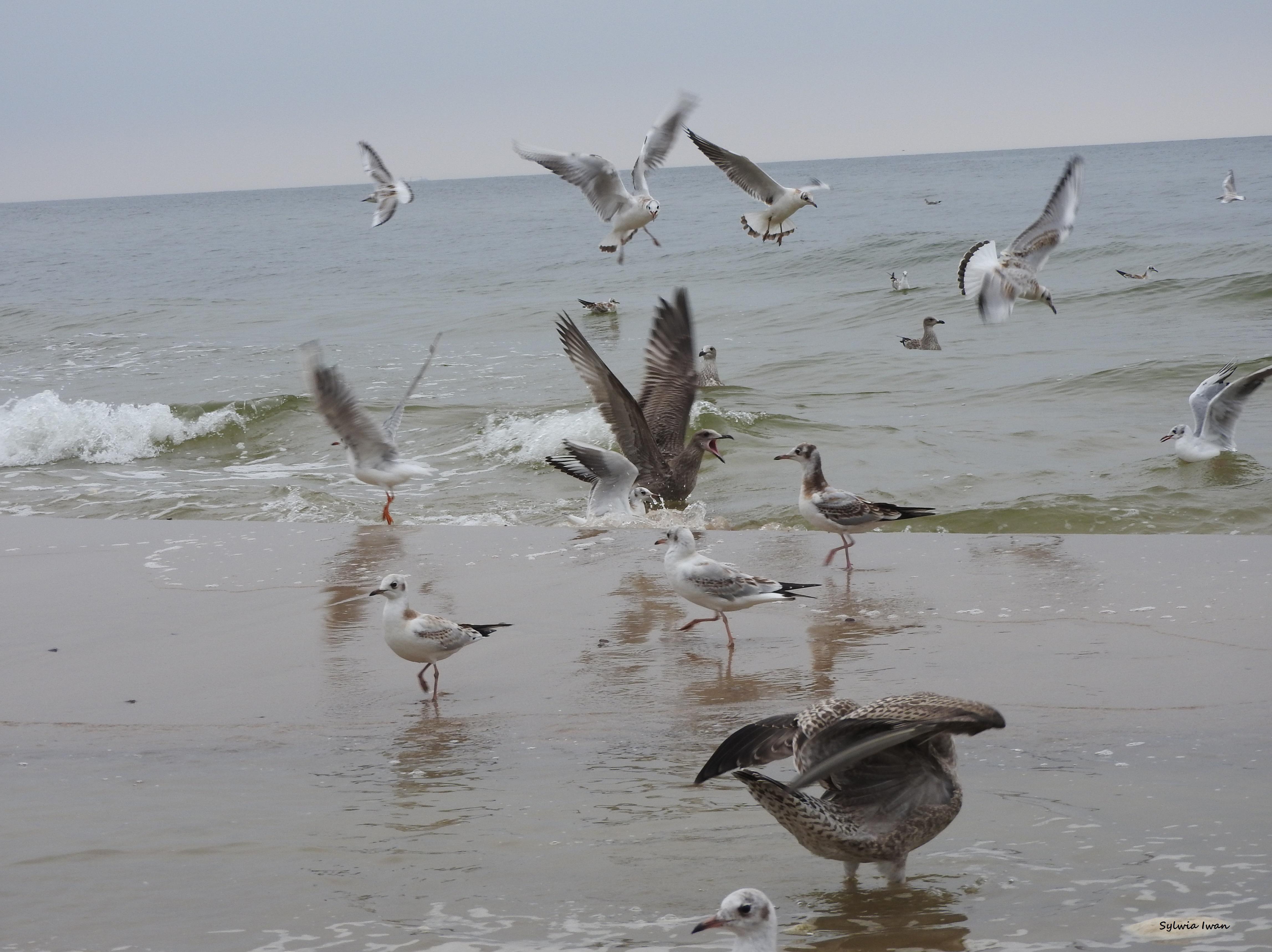 Wspomnienie morza