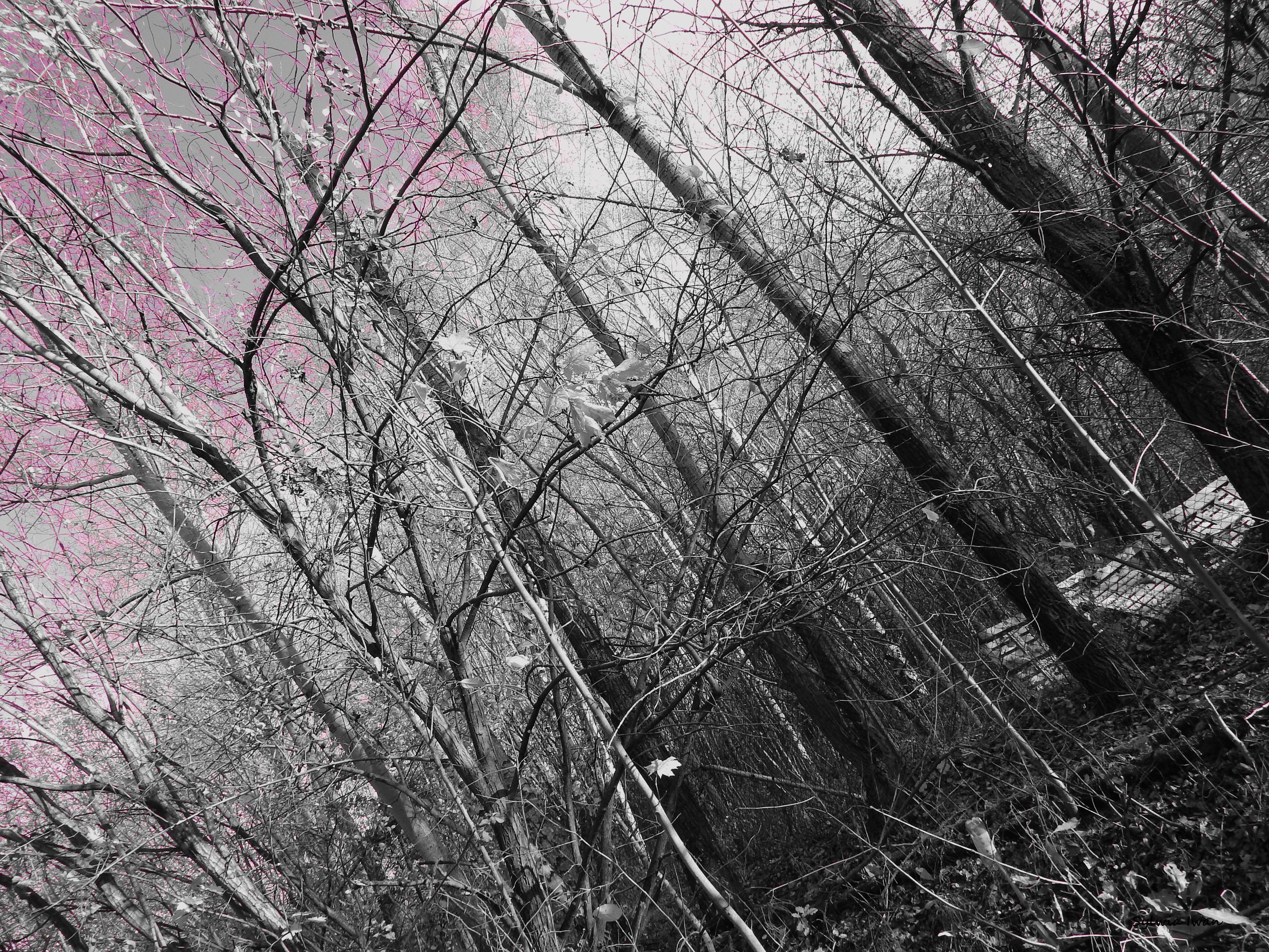 Drzewolśnienie