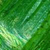 Przed zielenią szarość