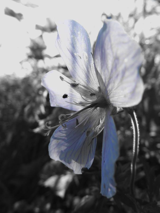 Kwiatek przy drodze