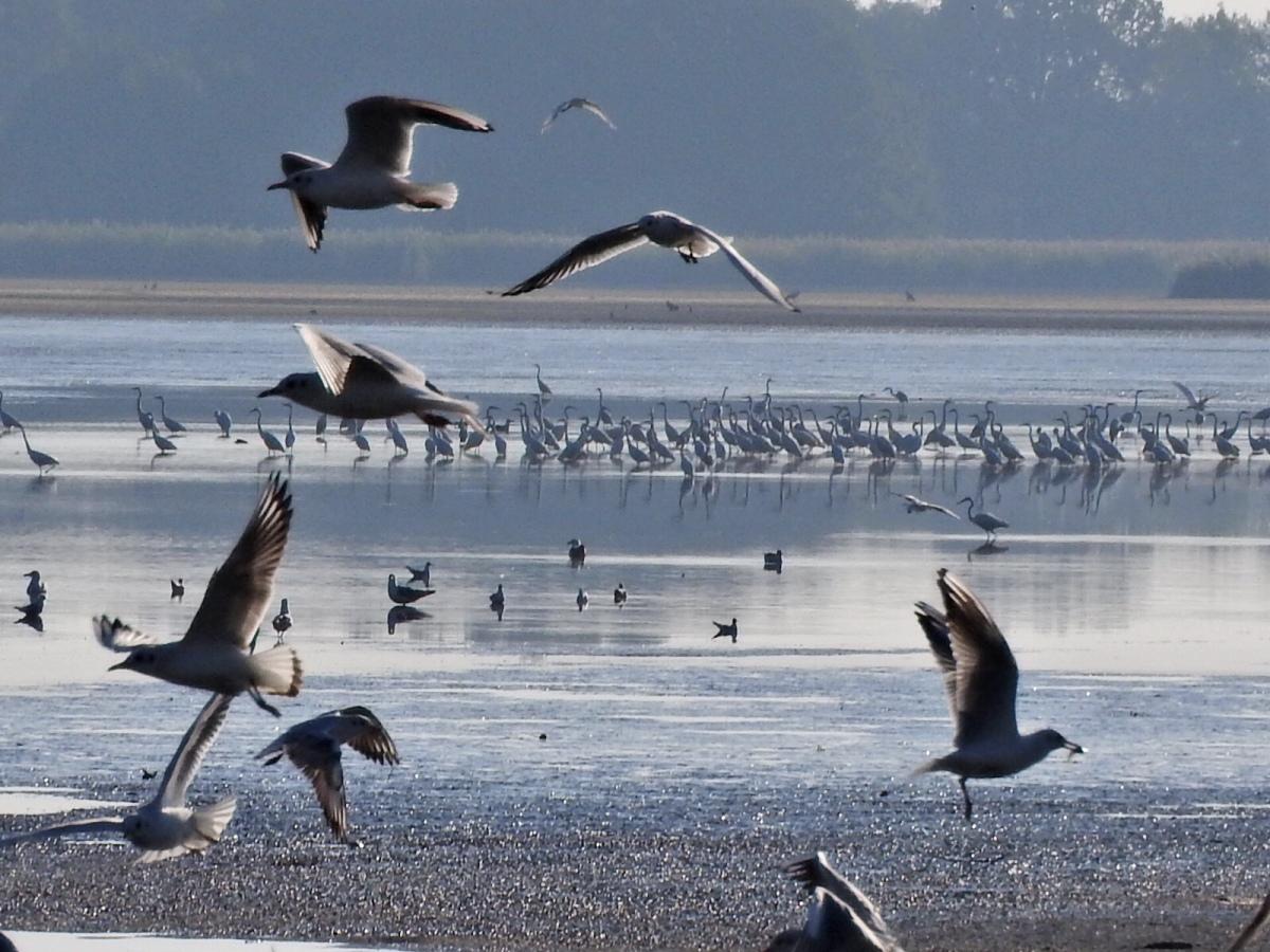 Ptaki z DolinyBaryczy