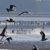 Ptaki/birdwatching