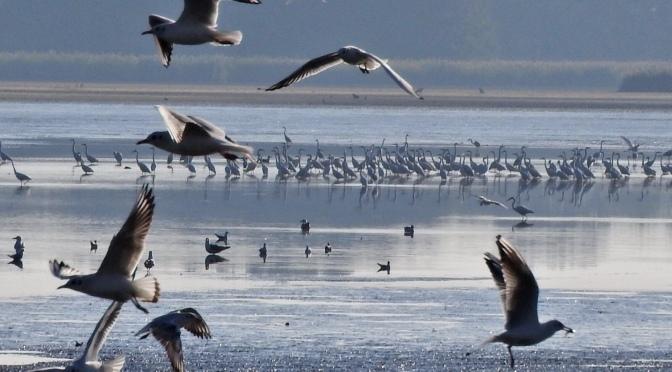 Ptaki z Doliny Baryczy