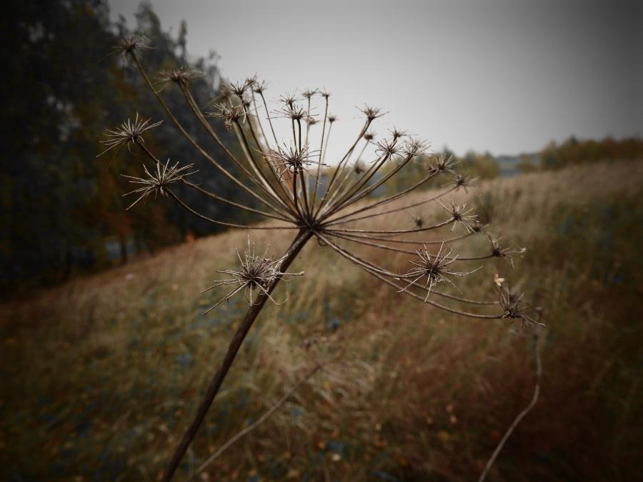 W suchych snach roślin / in the dry dreams ofplants