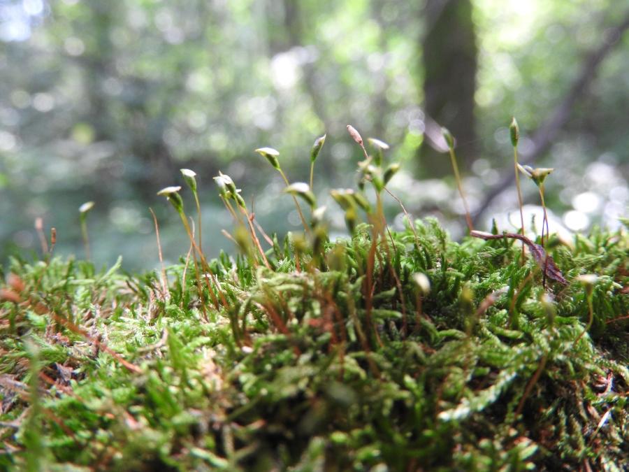 Moss bagno