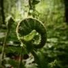 Natura/Nature