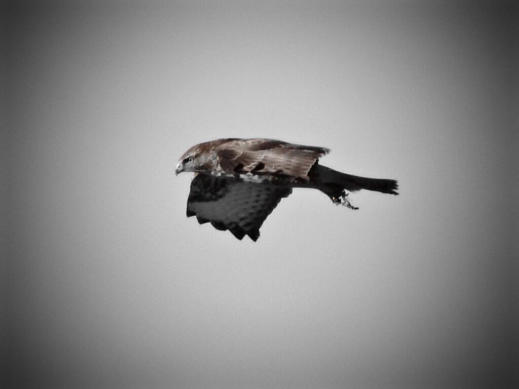 Sny o lataniu