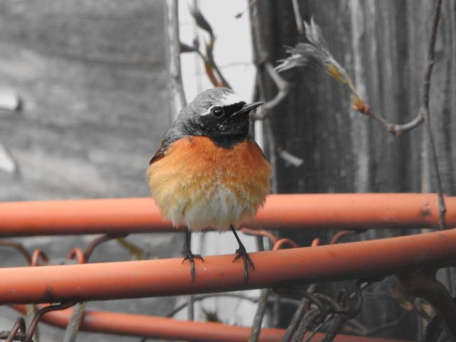 The Spring Birds