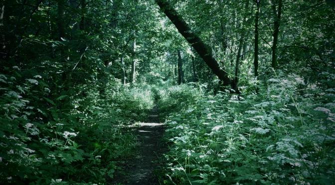 Przechodząc na leśny level