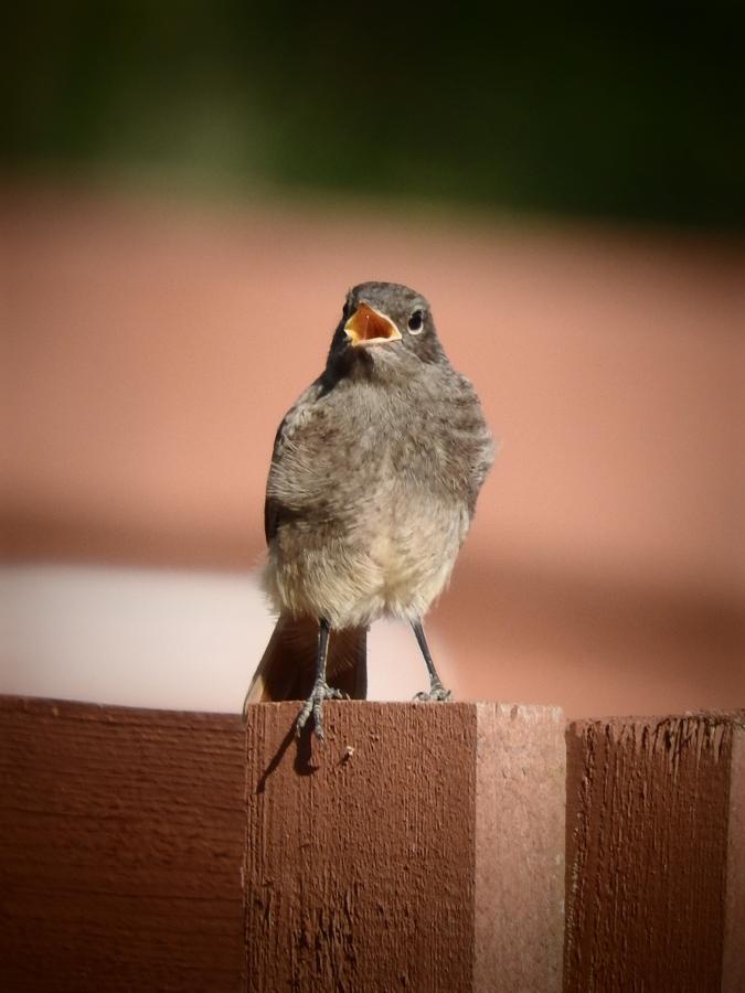 Ptaków śpiew
