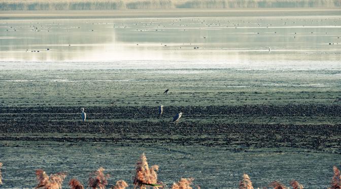 Ptaki w błocie (ze mną można tylko w błocie znikać cicho ;))