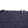 Deer Style