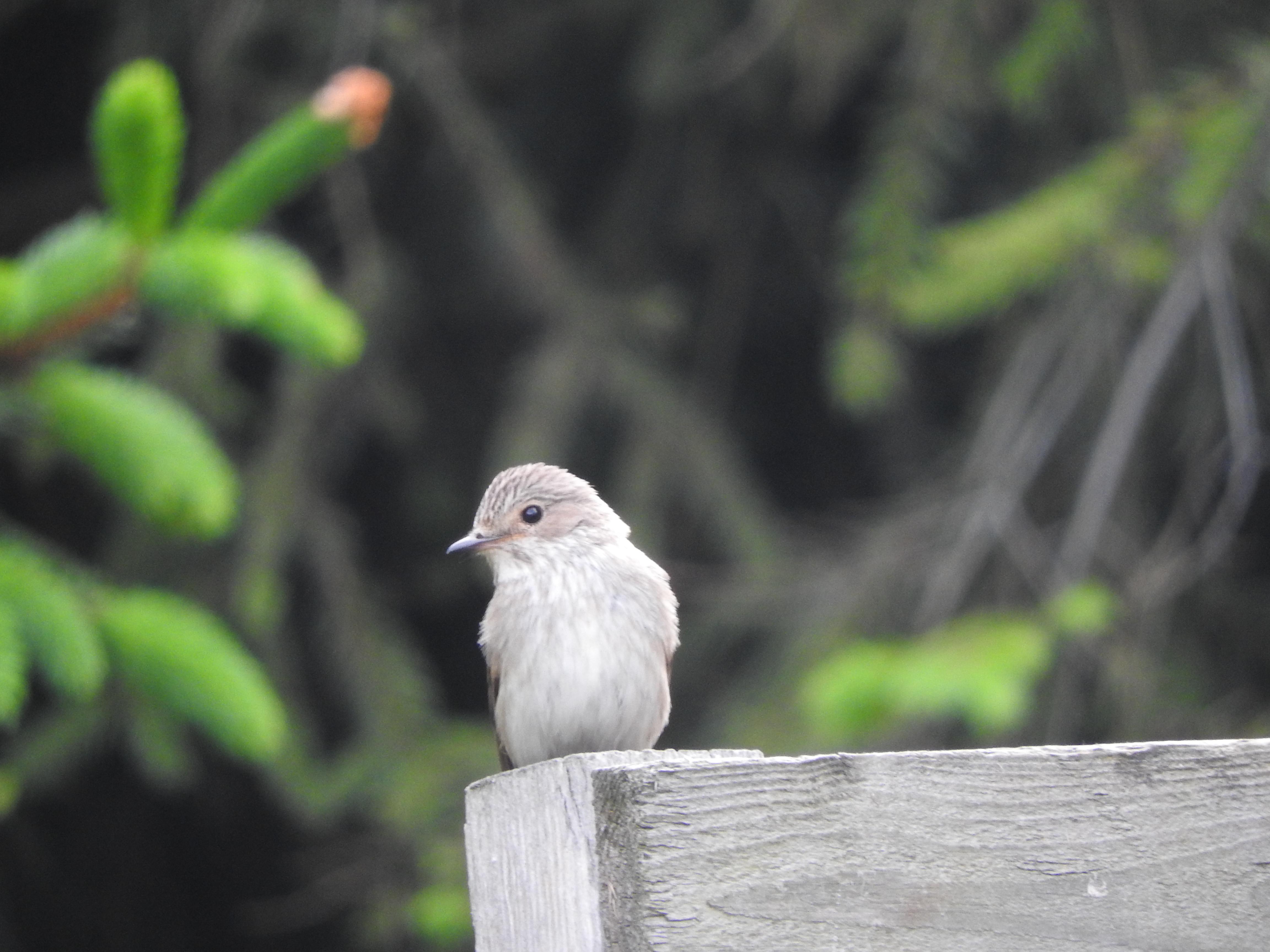 Wild little bird
