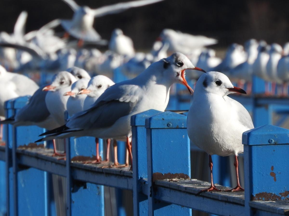 Ptaki w miejskiej kuchni / The birds in the urbankitchen
