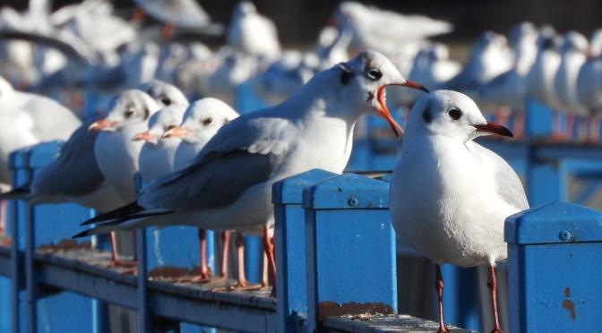 Ptaki w miejskiej kuchni / The birds in the urban kitchen