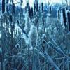 Blue Cane rozczochrane