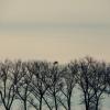 W koronkach drzew