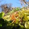 Mchy, mszary, parzęchliny / Moss
