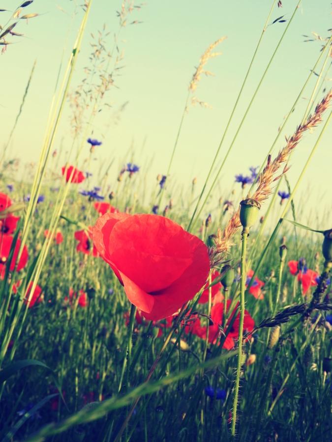 Łąka / Meadow