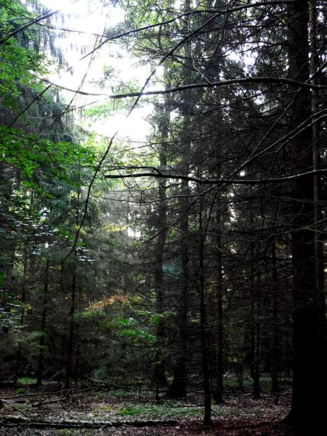 Slow Forest
