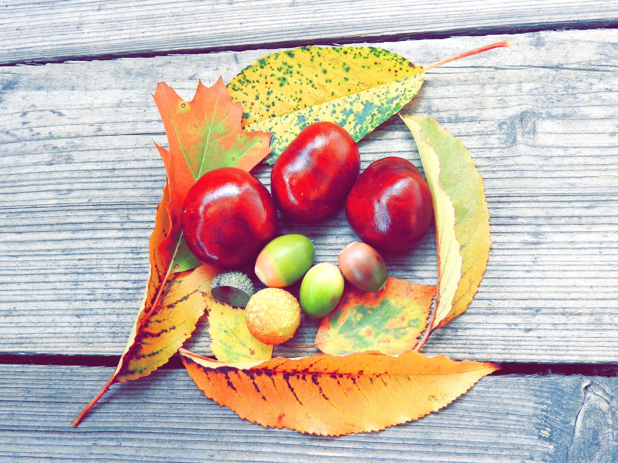 Jesień Autumn
