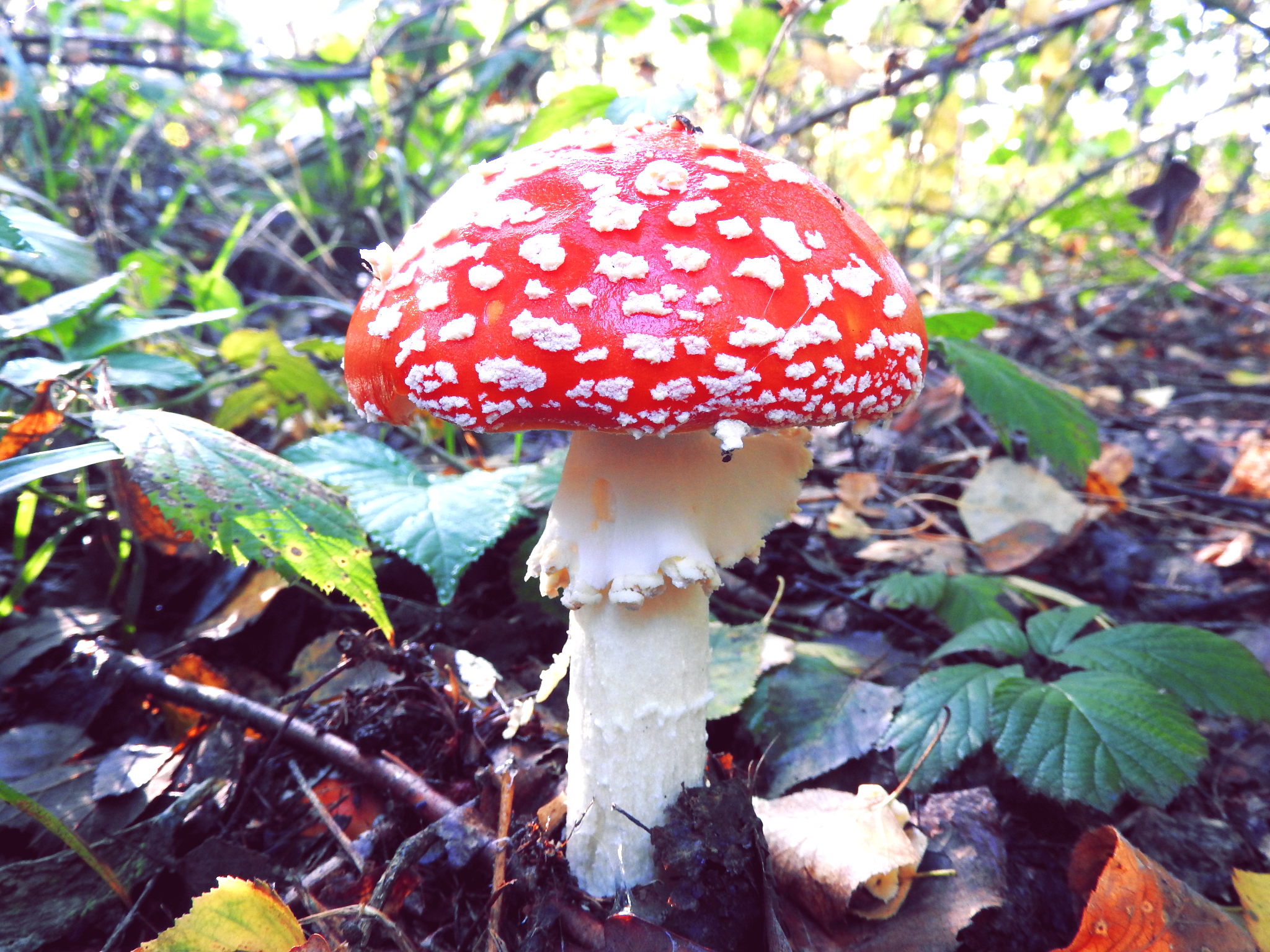 The Colorful Mushrooms